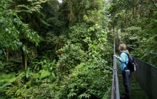 Tamarindo - Monteverde